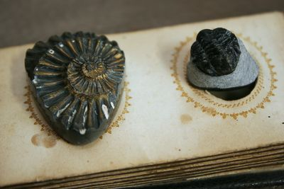 Fossils 1